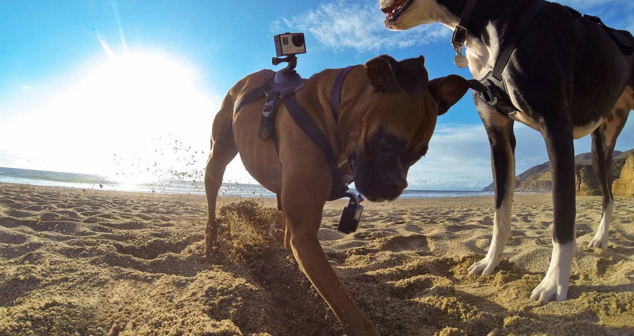 GoPro Fetch - Cameras for Pets 2