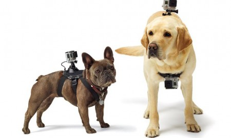 GoPro Inc Fetch Dog Mount