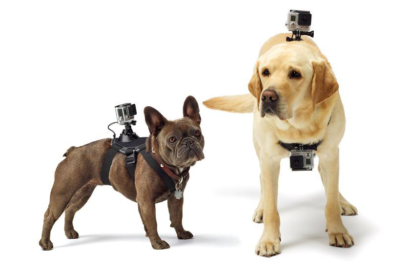 GoPro Fetch – Cameras for Pets