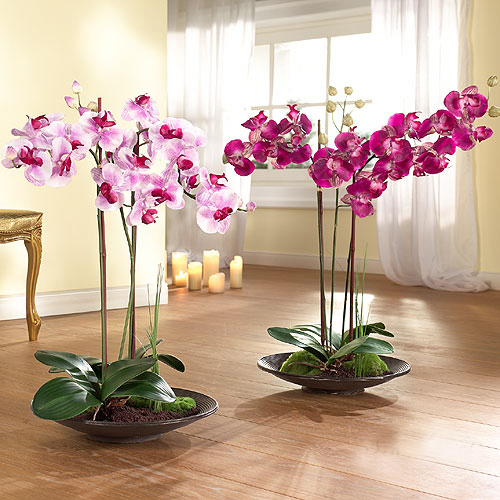 In the World of Orchids 2