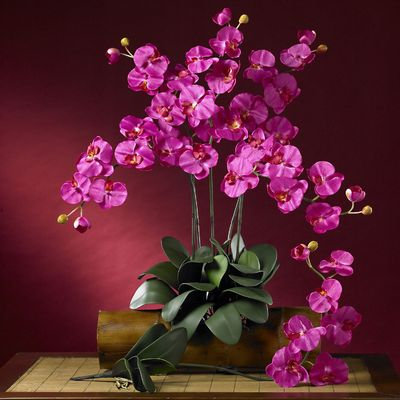 In the World of Orchids 5