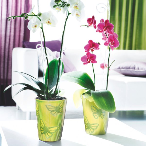 In the World of Orchids