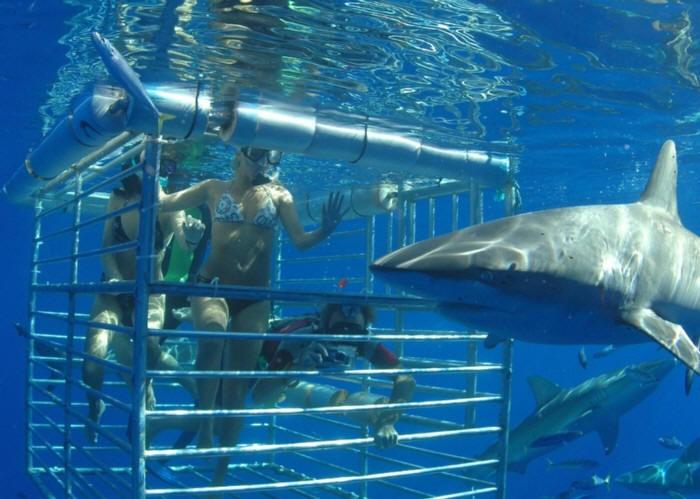 Shark Ecotourism Isla Guadalupe 2