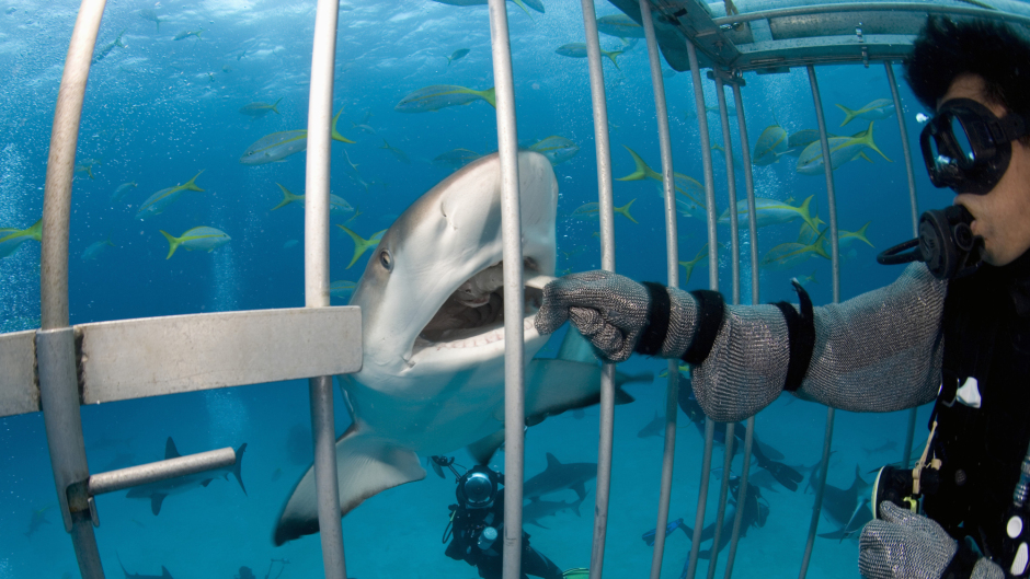 Shark Ecotourism Isla Guadalupe 3