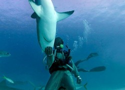 Shark Ecotourism at Isla Guadalupe 4