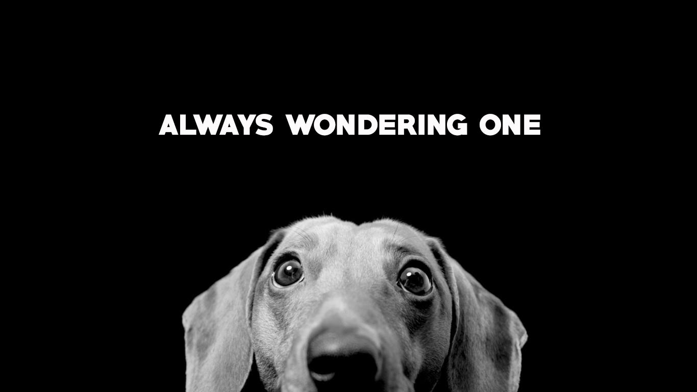 always wondering