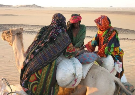 camels of Toubou people