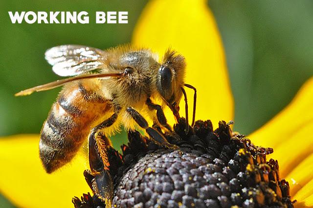 wortking bee