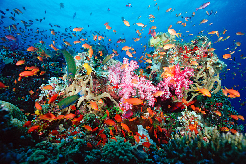 Great Barrier Reef different fishes