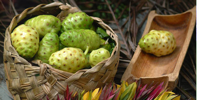 Noni fruits in basket