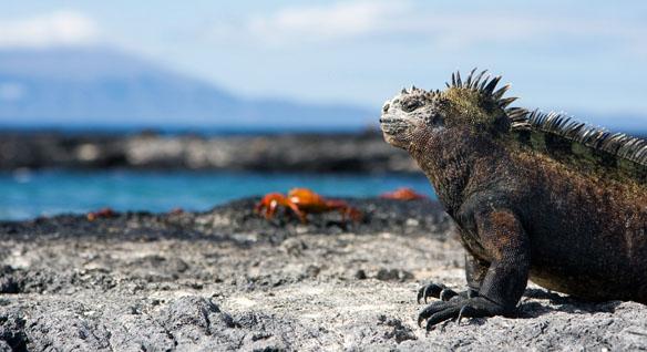 Galapagos Islands Unique wildlife