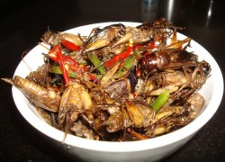 Fried water beetles 2