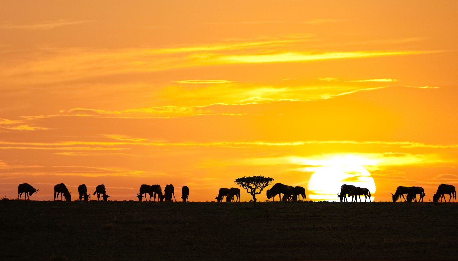 Serengeti National Park sunset with antelopes