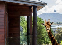 The Jamala Wildlife Lodge exterior with giraffe