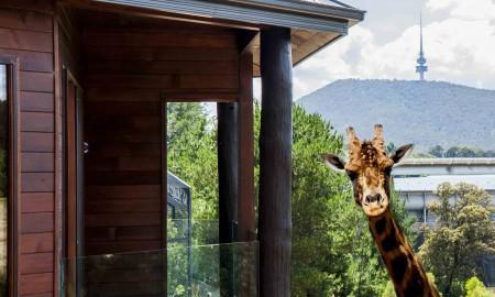 The Jamala Wildlife Lodge exterior with giraffe