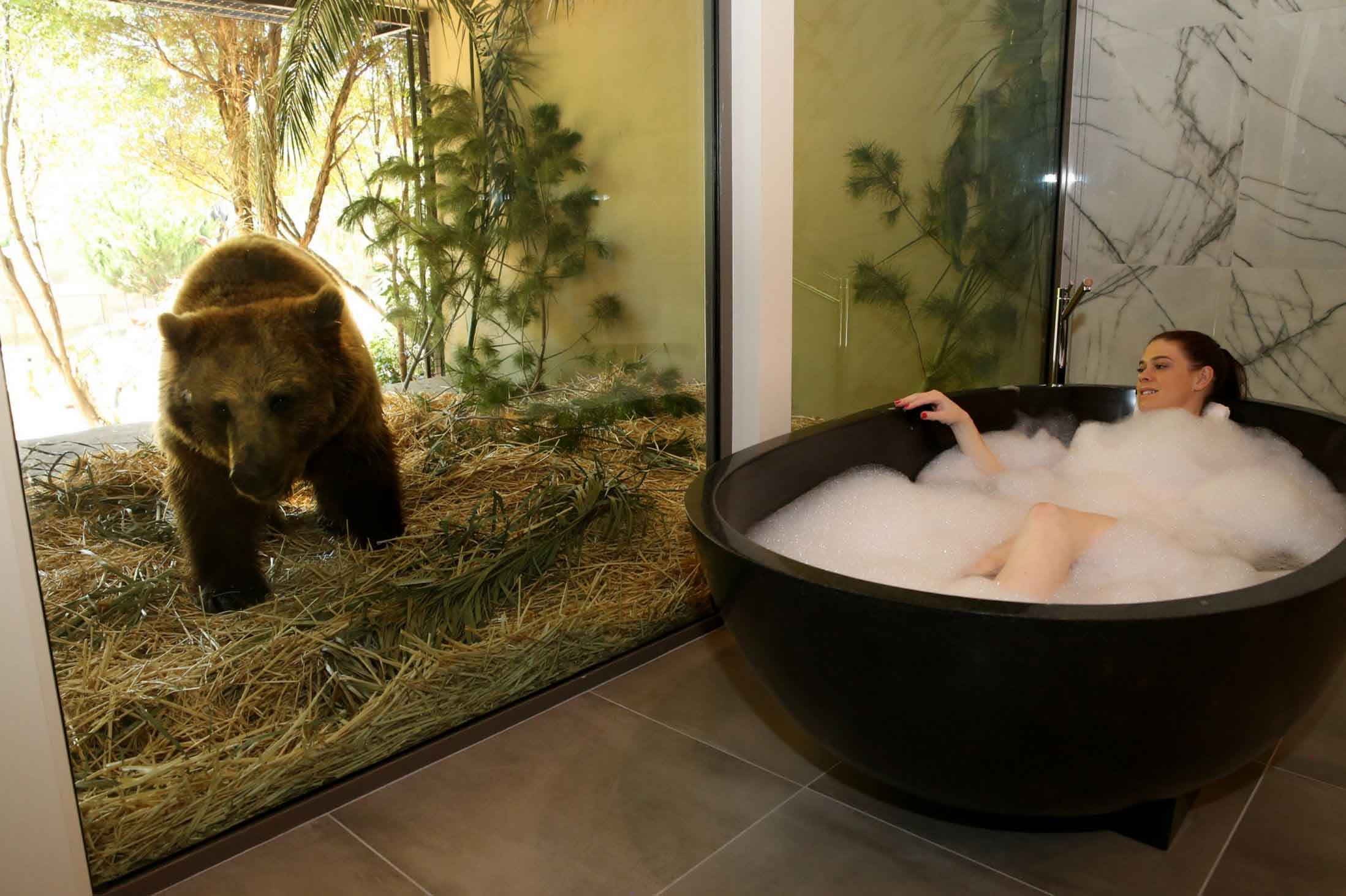 The Jamala Wildlife Lodge hotel room with a bear