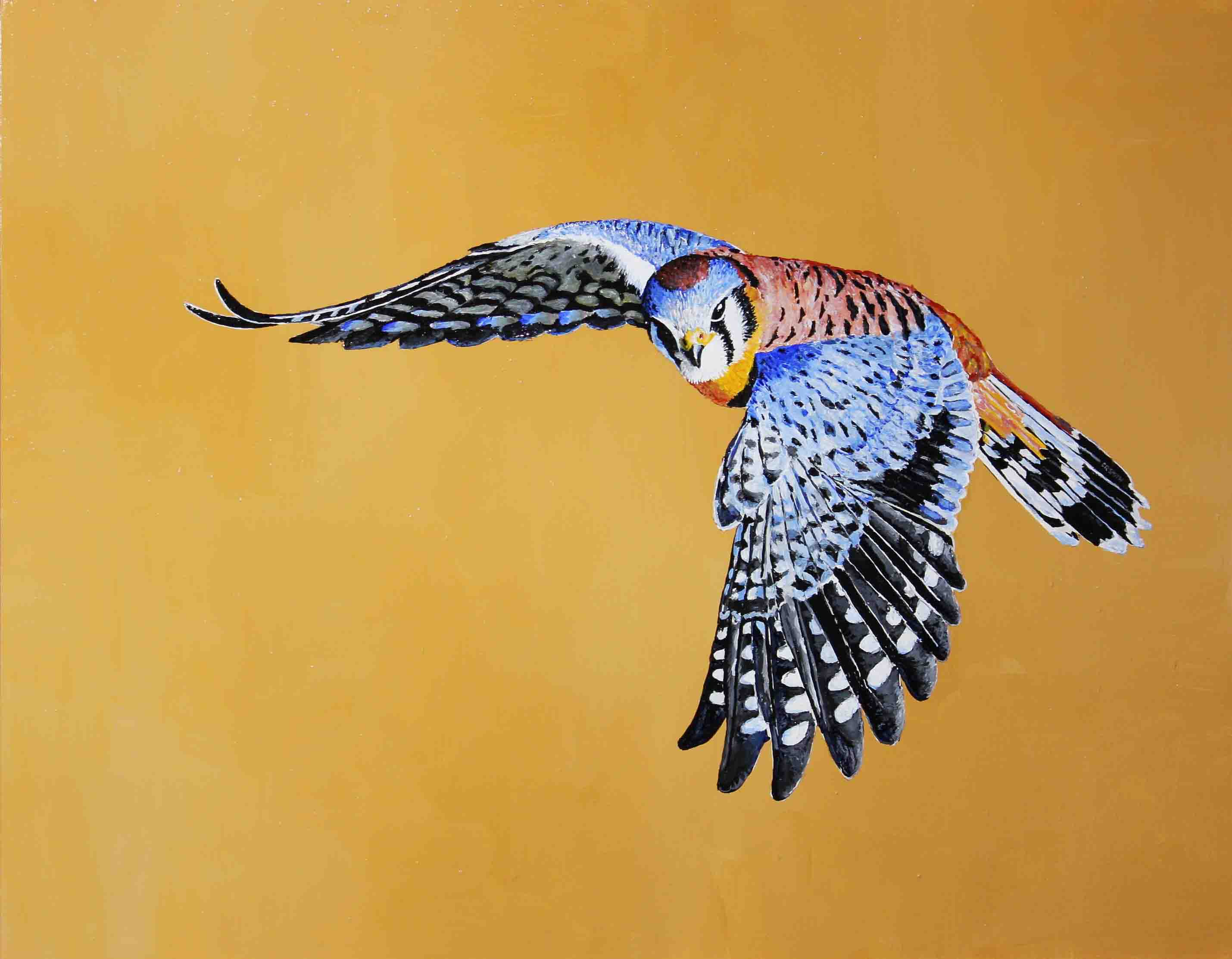 American-Kestrel-in-Flight
