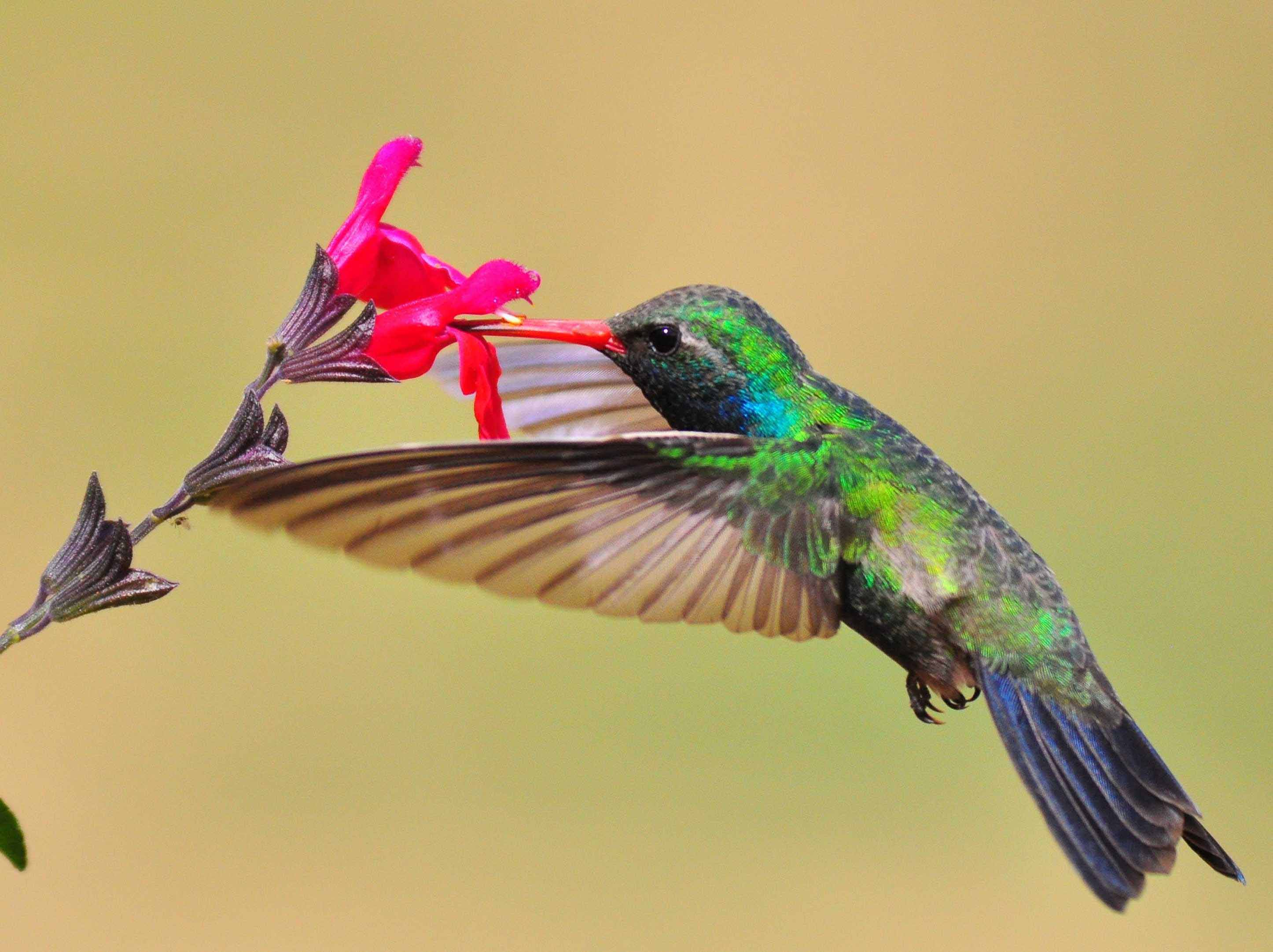 Hummingbird and a flower