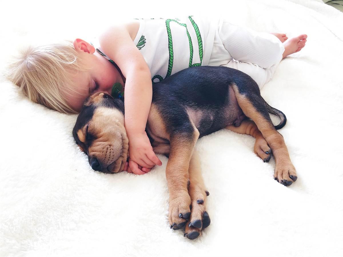 sleep and nap sleeping with a dog