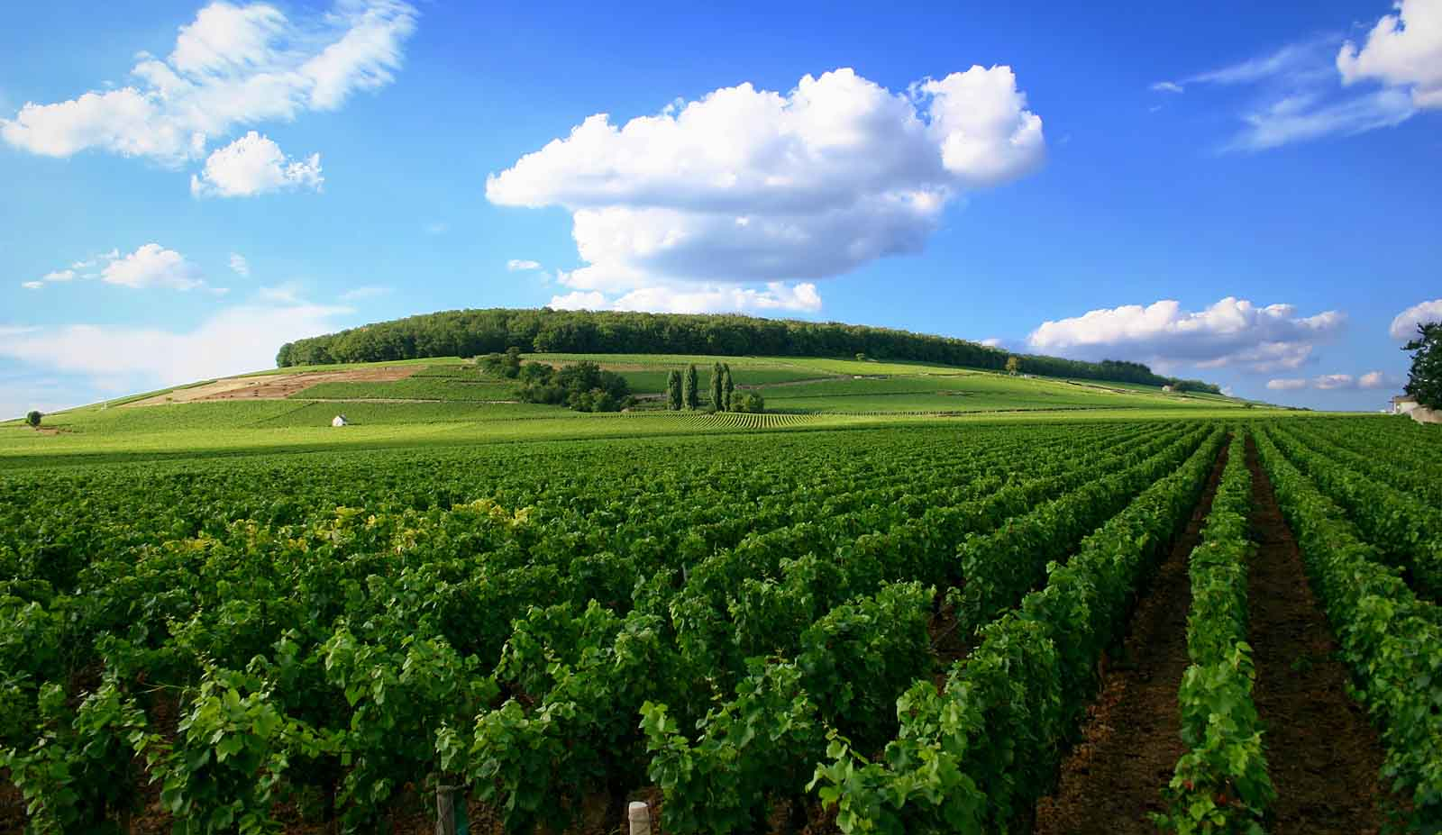 Burgundy, France vineyard 2