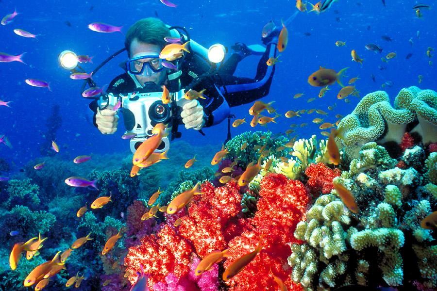 Diving coral reef