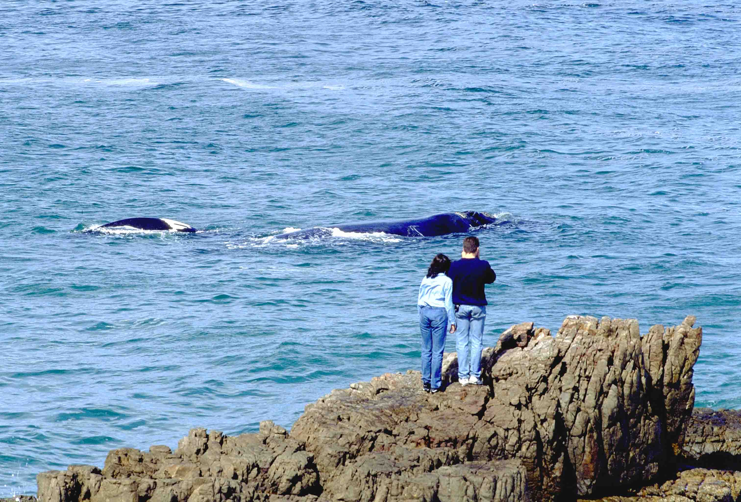 Hermanus, Western Cape couple observing whales
