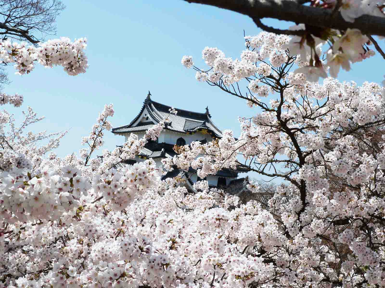 Hikone Castle in Japan 2