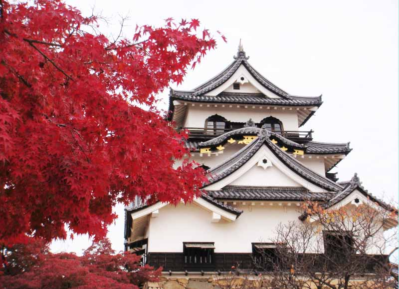 Hikone Castle in Japan autum