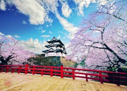 Hirosaki Castle bridge with cherry blossoms