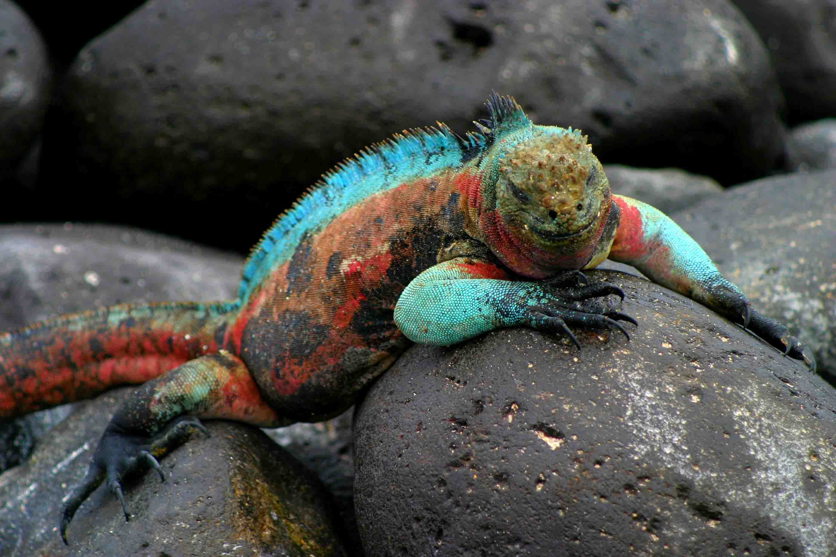Galapagos Islands: Darwin Inspiration - PRE-TEND Be curious.