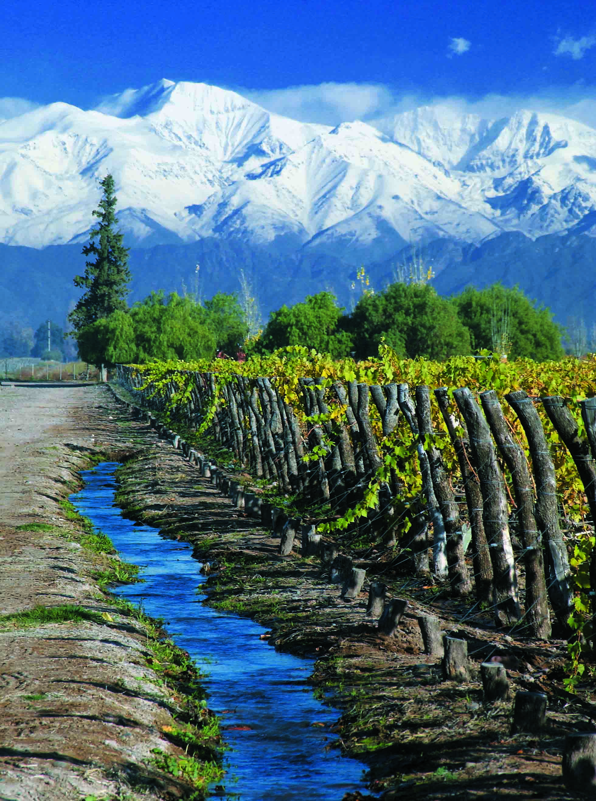 Mendoza Province, Argentina vineyard with river and mountain