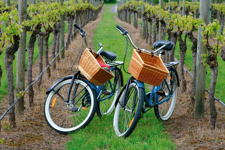 Sonoma County, California bike tour among vineyards