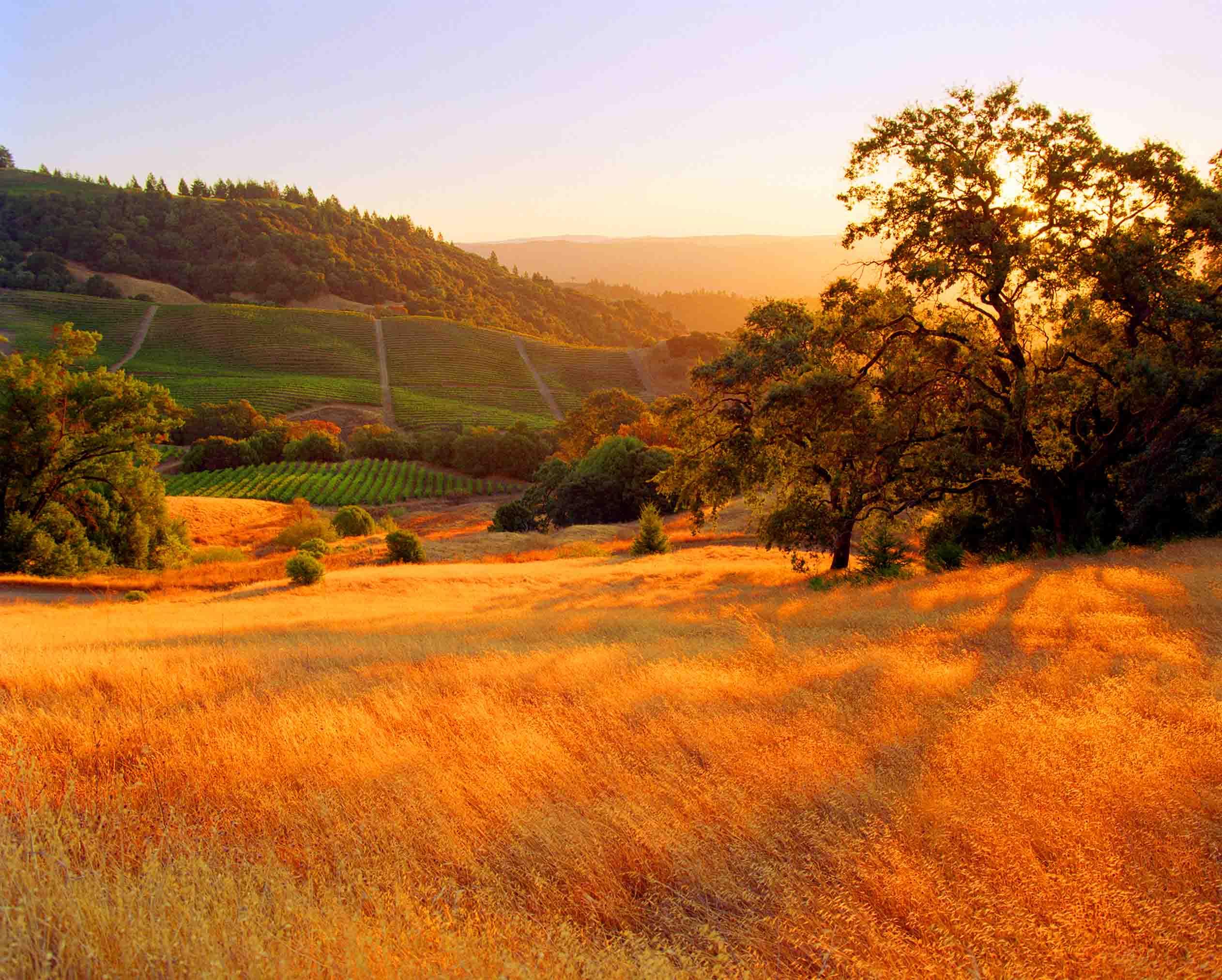 Sonoma County, California vineyard 2