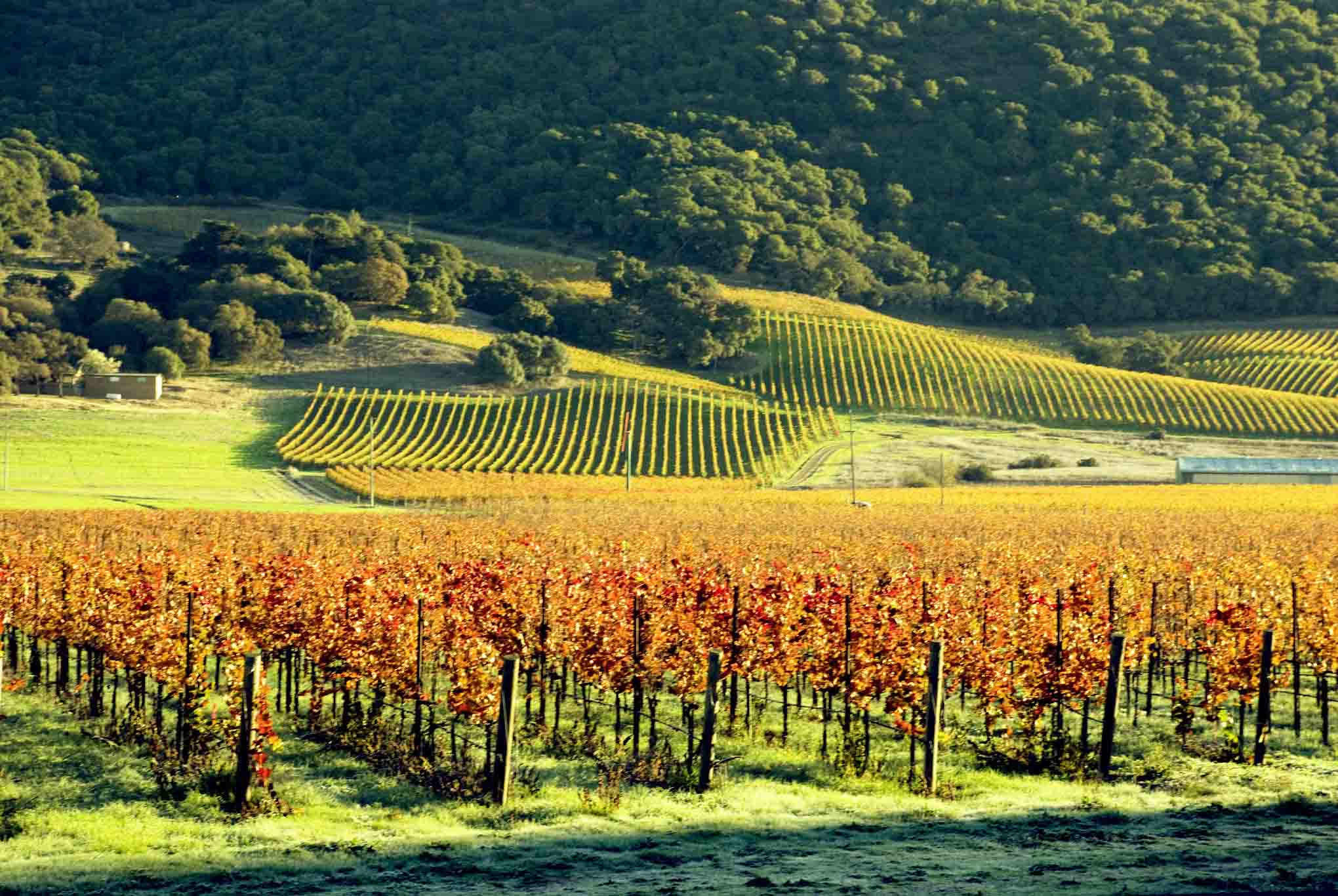 Sonoma County, California vineyard