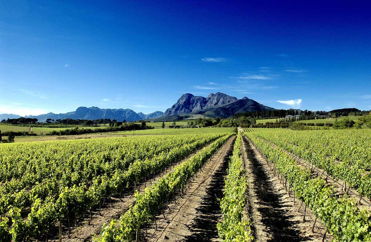 Stellenbosch, South Africa vineyards