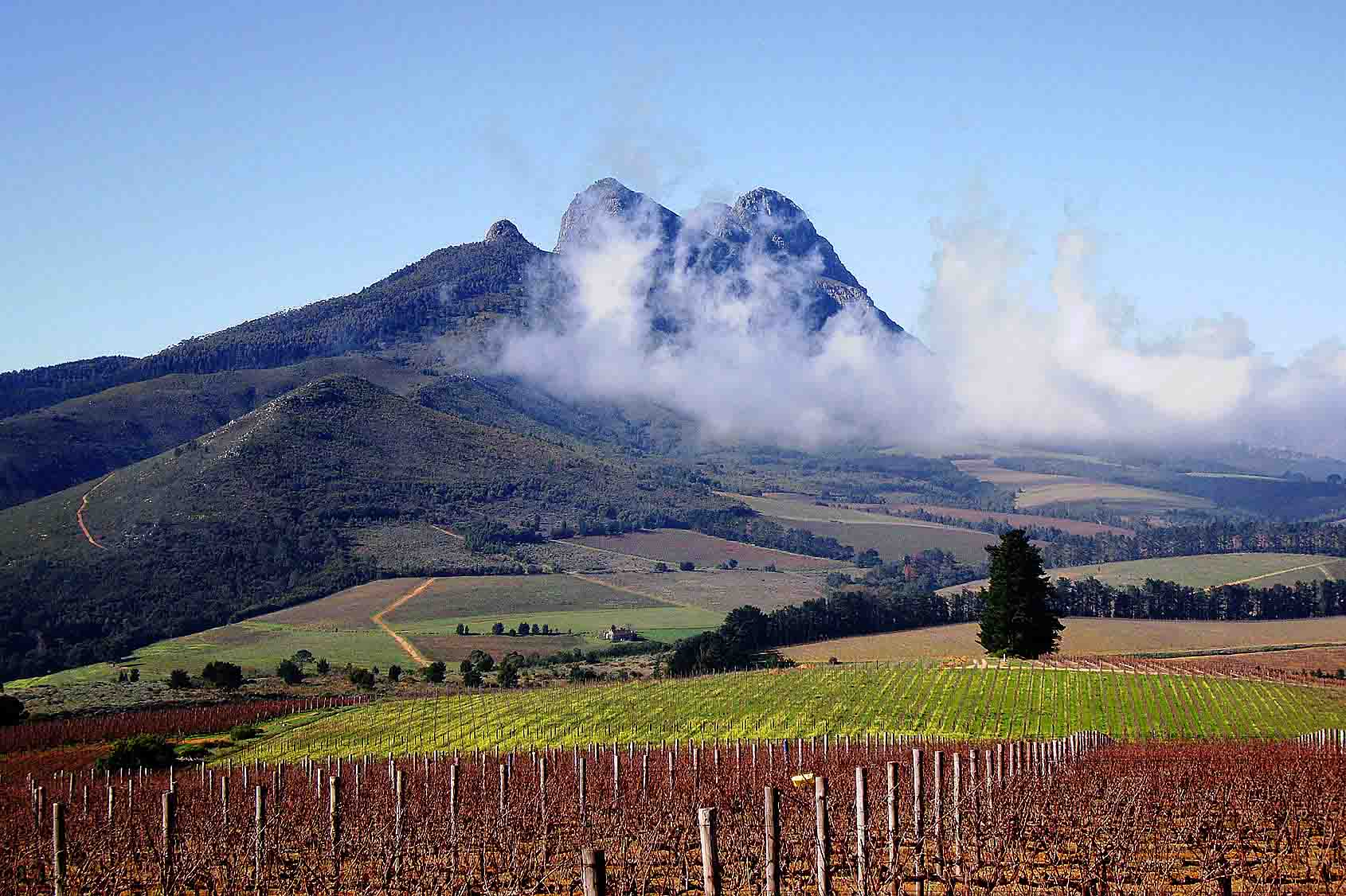 Stellenbosch, South Africa wine