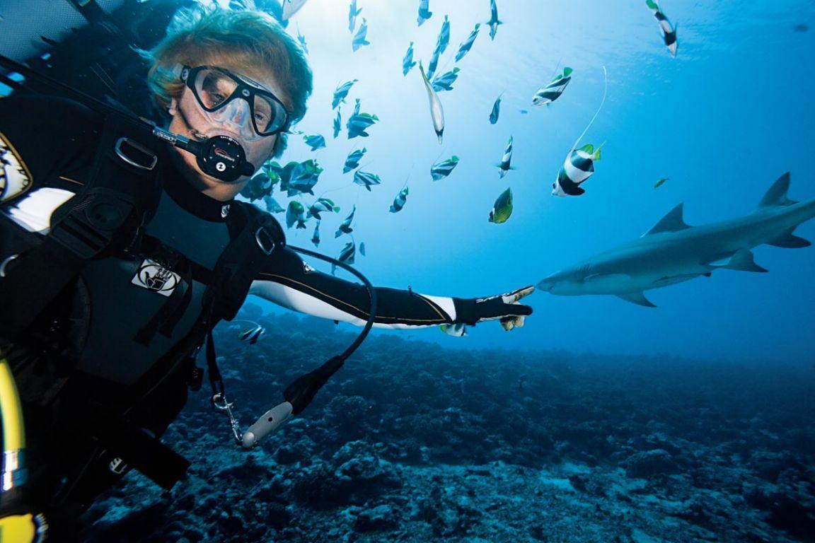 The tubbataha reef national park shark