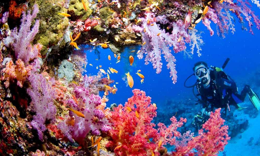 Travel_Philippines_Tubbataha_Reef