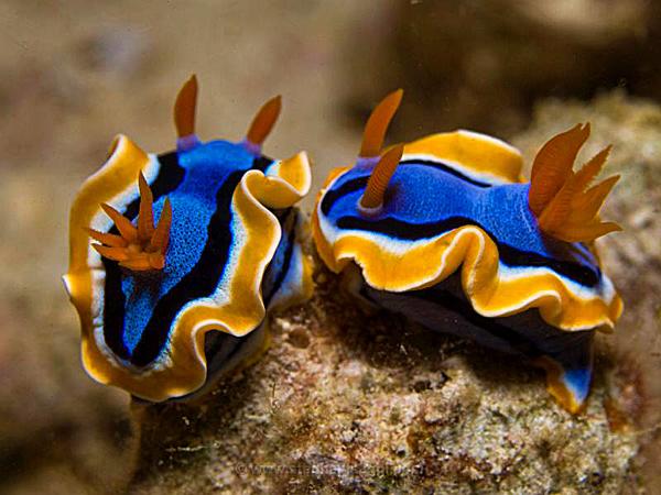 Tubbataha reef in Philippines