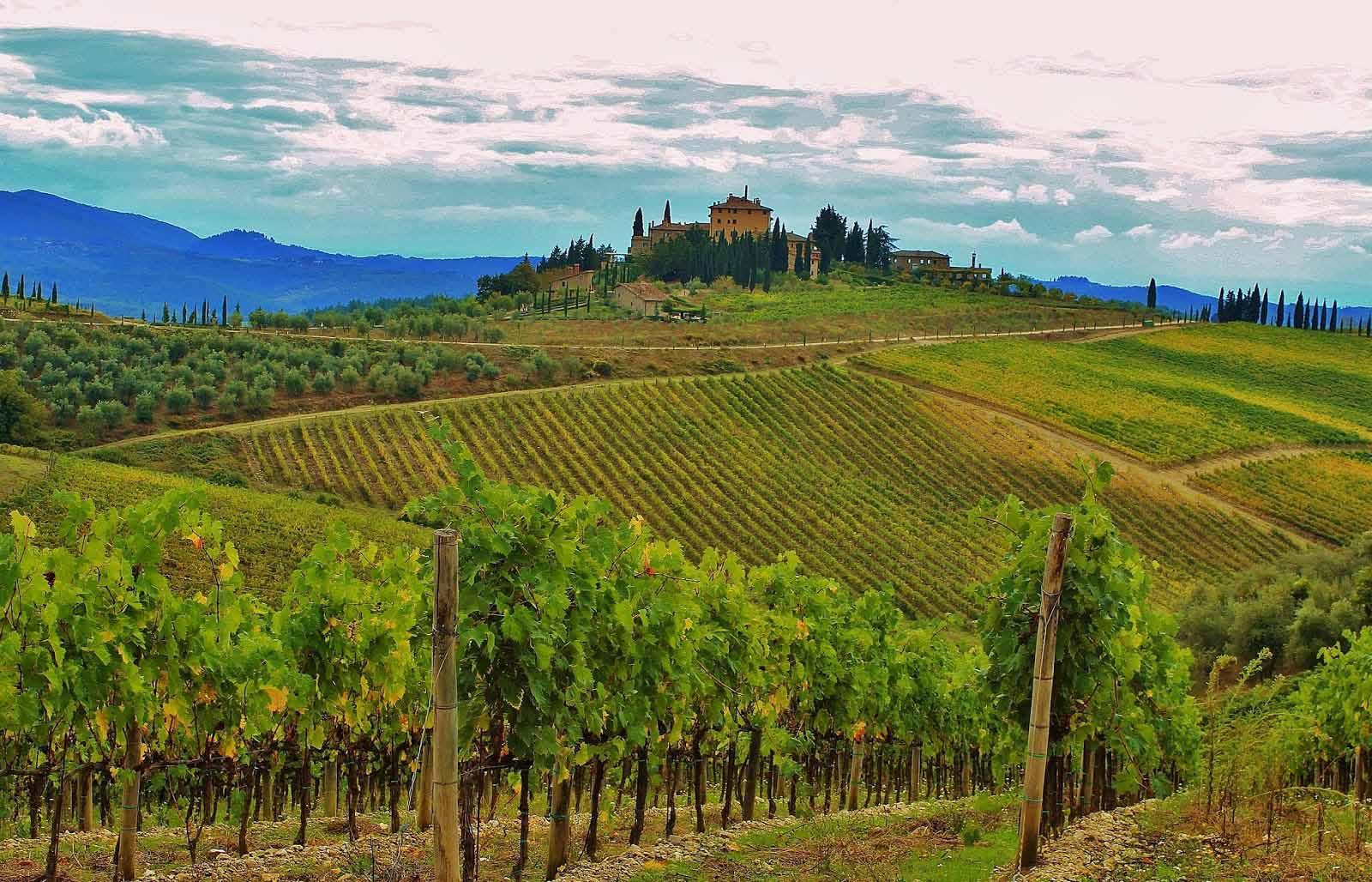 Tuscany Italy Vineyards