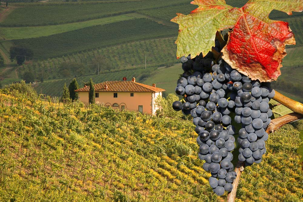 Vineyard-in-Chianti-Tuscany-Italy-famous-landscape wine