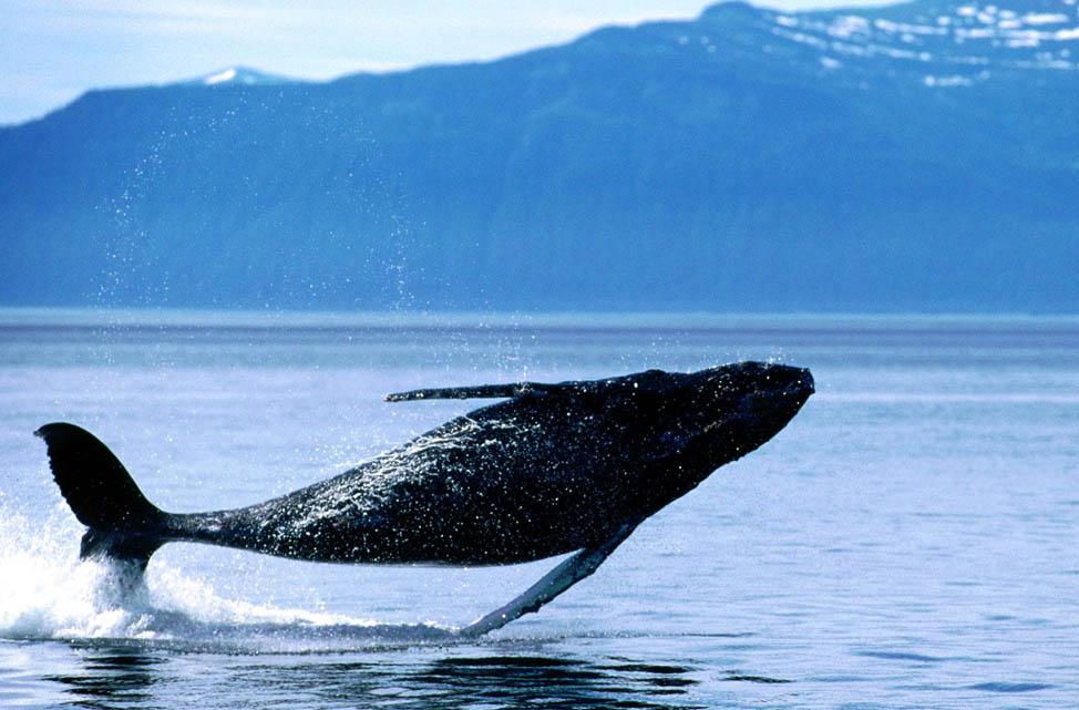 Whale-Watching-Kaikoura New Zealand