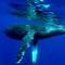 The Best Places For Whale Watching