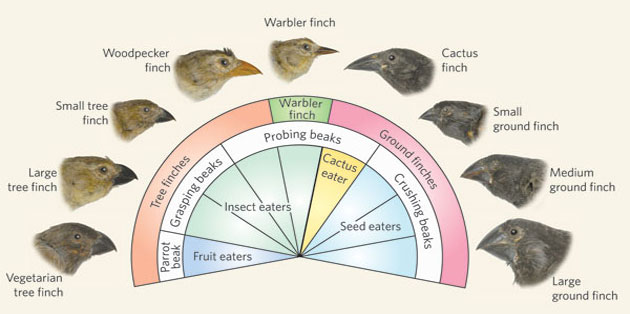 how to tell if finches are happy