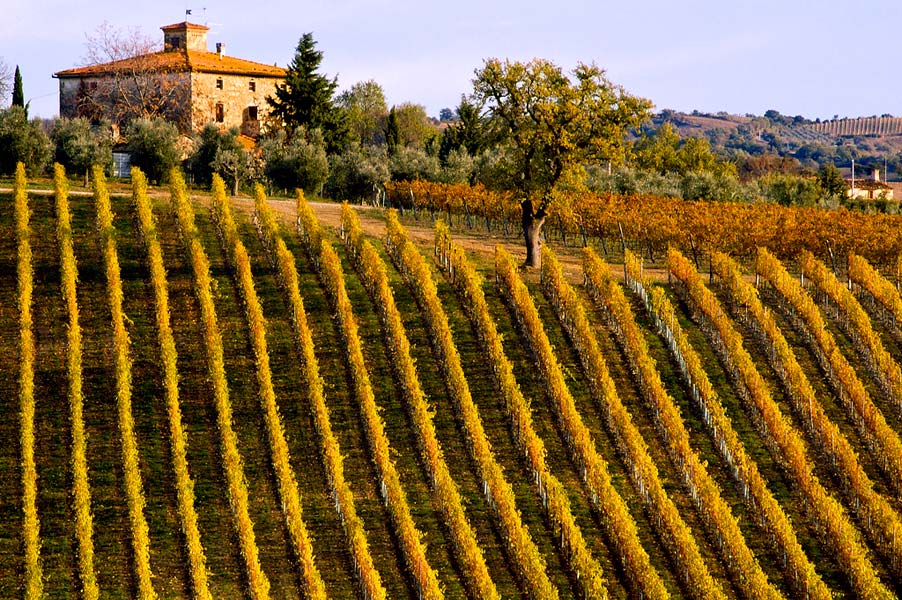 tuscany-vineyard Italy wine