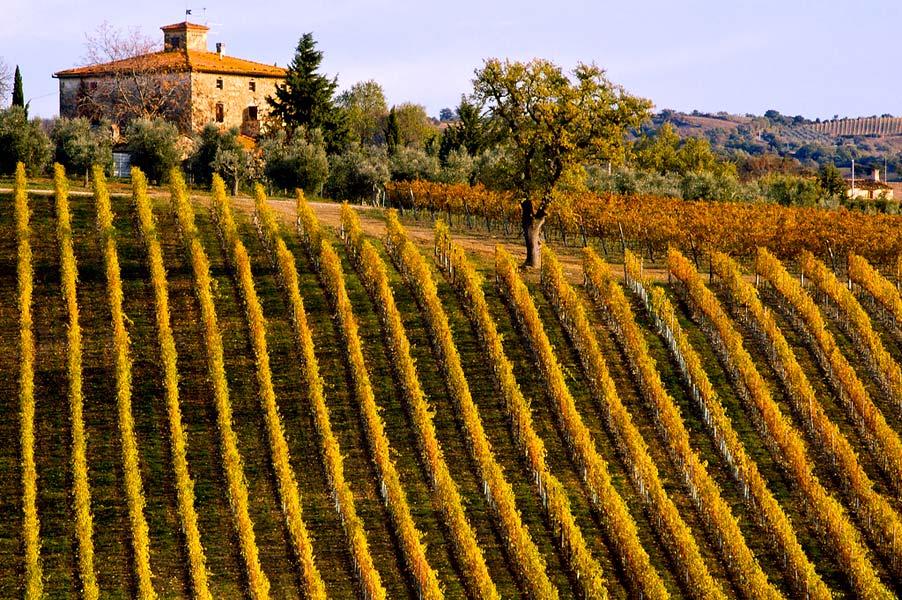 tuscany-vineyard Italy wine