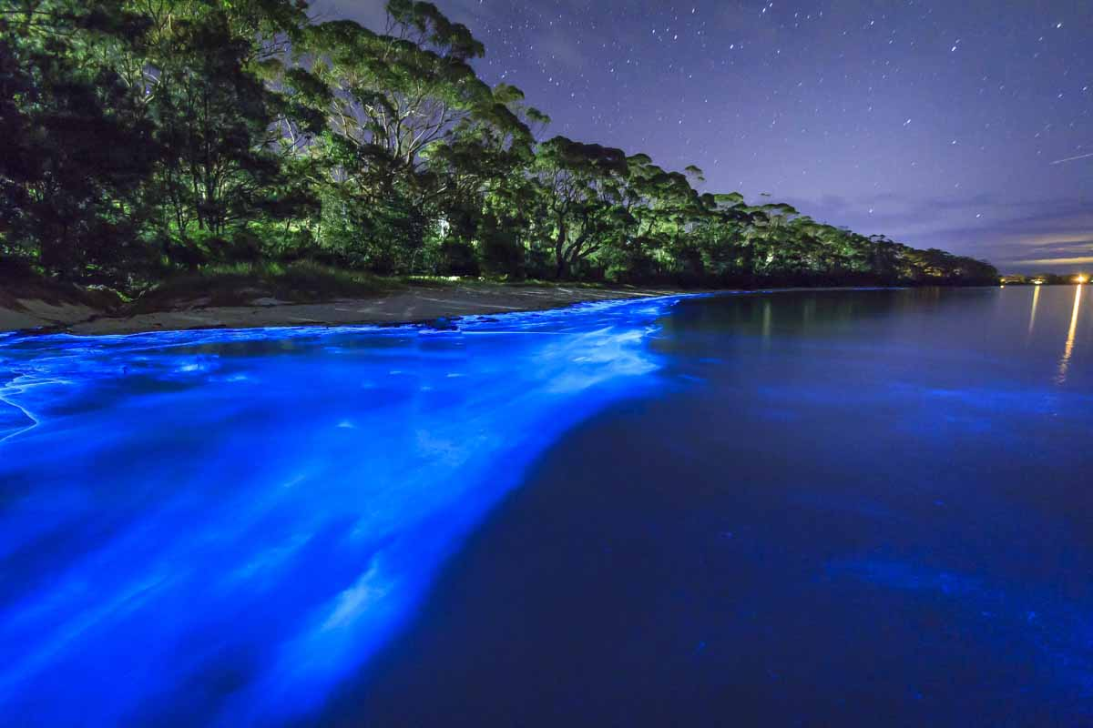 Bio Bay Puerto Rico (Bioluminescent Bay) most interesting places to swim