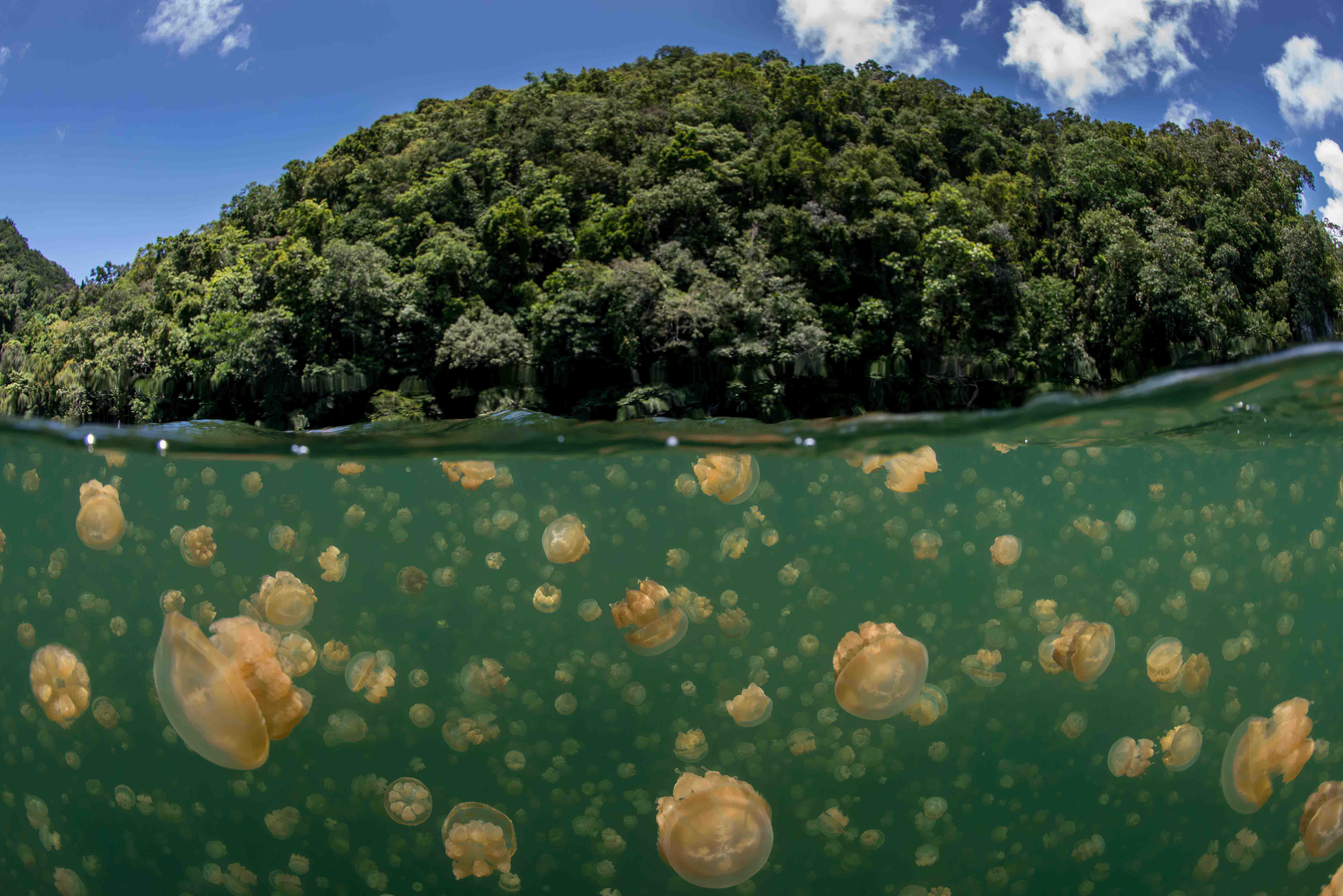 Jellyfish Lake, Palau best places to swim 2
