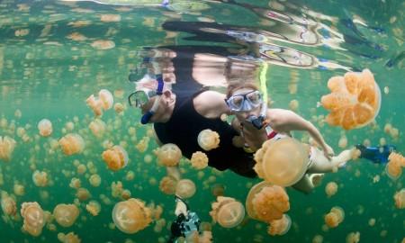 Snorkeling Jellyfish Lake