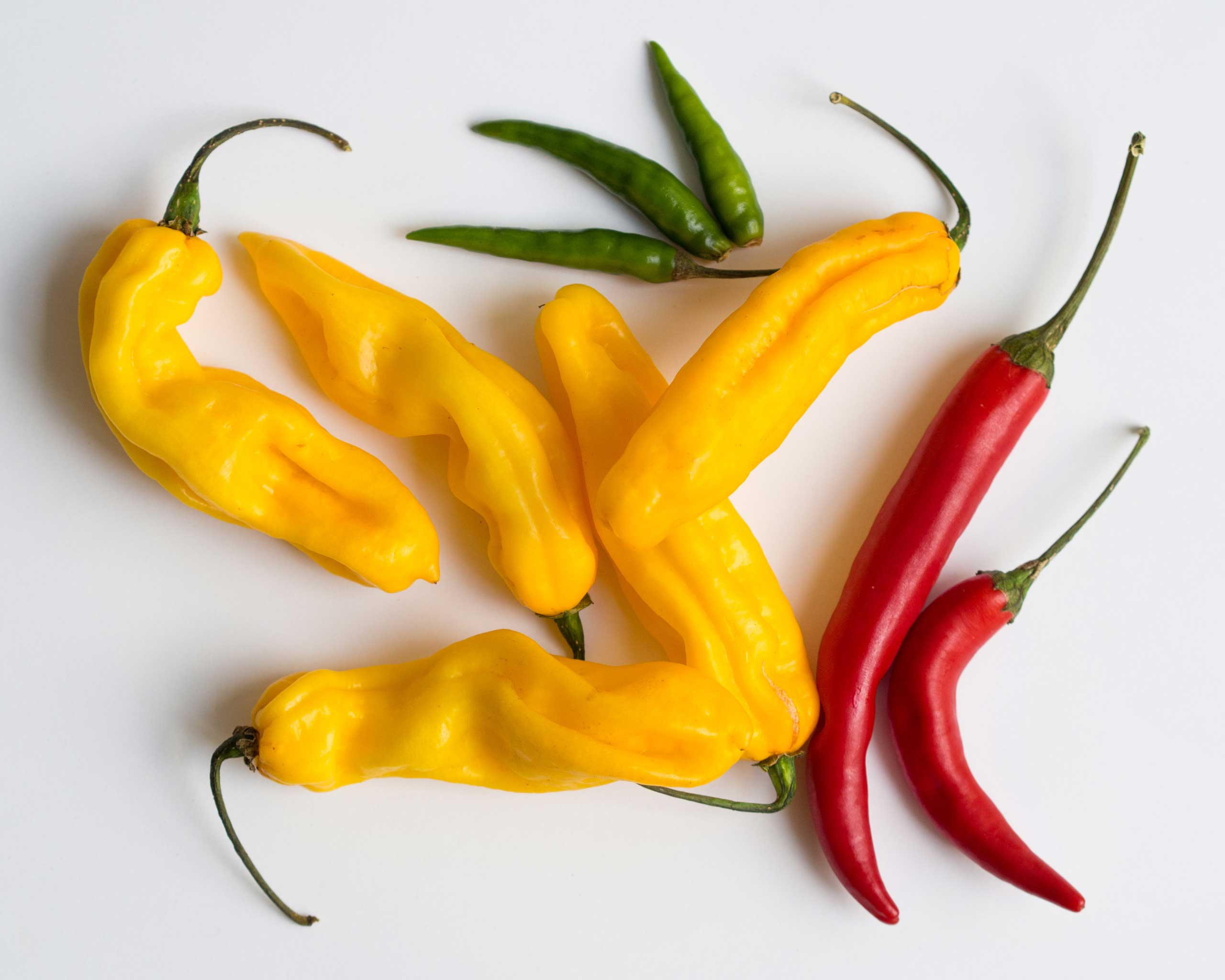 Madame_Jeanette_and_other_chillies